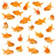Group of goldfishes Stock Photos