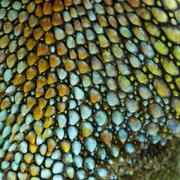 reptile skin - stock photo