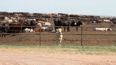 Northwest Oklahoma - Stockyard 02 - One Cow Looking at Camera Stock Footage