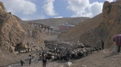 Cattle going into the mountains in the morning,Kibber,Spiti,India Stock Footage