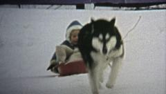 1973: Dog wildly pulling child on winter snow sled. - stock footage