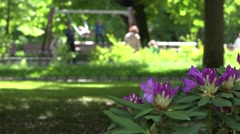 Rhododendron flower blooms and blurred parent swing children. 4K Stock Footage