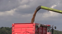 Agricultural machine load harvested grain into truck trailer - stock footage