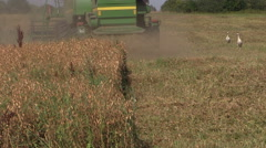 Harvester machine trash peas plants in agricultural field - stock footage