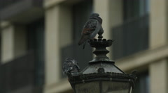 Pigeons sitting on a lamppost in Berlin Stock Footage