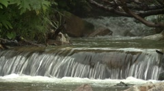Small waterfalls on the forest river Stock Footage