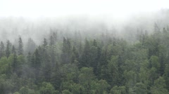 Mist over the forest time lapse - stock footage