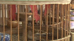 Small birds in wooden cages, Rural China - stock footage