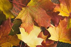 Autumn leaves directly from above Stock Photos
