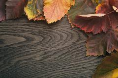 Autumn hawthorn leaves directly from above Stock Photos