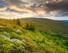 Stones and conifer trees on hillside at sunrise Stock Photos