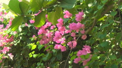 Pink flowers Stock Footage