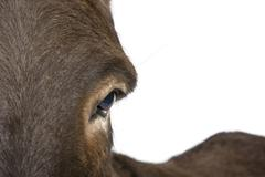donkey (4 years) - stock photo