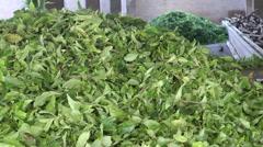 Tea Factory fresh tea leaves Stock Footage