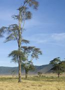 View of the view Ngorongoro Crater, tanzania - stock photo