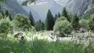Stock Video Footage of Alps in blossom season