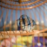 Bird in cage Stock Photos