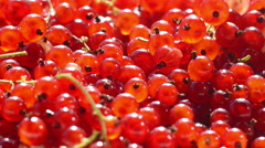 Red currants in a bowl sprinkling Stock Footage