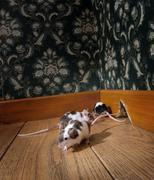 group of mice walking in a luxury old-fashioned room - stock photo