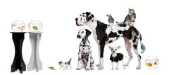 Group portrait of animals in front of black and white background - stock photo