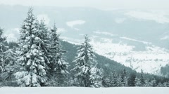 Spruce Tree Forest Covered by Snow in Winter Landscape Stock Footage