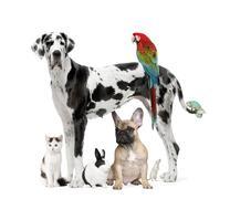 Group of pets - Dog,cat, bird, reptile, rabbit Stock Photos