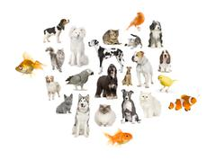 Arrangement of 22 domestic animals - stock photo