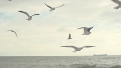 Gulls in the sky. Slow motion. - stock footage