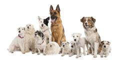 group of dog : german shepherd, border collie, Parson Russell Te - stock photo