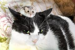 Hamster and cat - stock photo