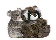 Portrait of male Koala bear hugging teddy bear, Phascolarctos cinereus, 9 months Stock Photos