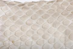 Close-up of squamata, scaled reptile against white background, s Stock Photos