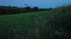 Fireflies Flicker in a New England field, summer landscape Stock Footage