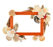 Empty frame decorated with seashells Stock Photos