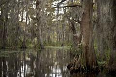 Swamp near New Orleans, Louisiana Kuvituskuvat