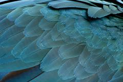 Close-up of Blue-and-yellow Macaw's feathers, Ara ararauna Stock Photos