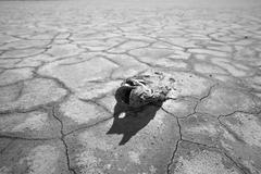 California Drought in Black and White Kuvituskuvat
