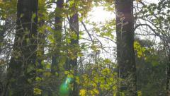 Autumn beautiful nature colorful outddoor 4K 3840X2160 UHD footage - Outdoor Stock Footage