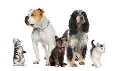 Group of pets : dogs and cats - stock photo