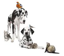 Group of pets : dog, bird, rabbit, cat and ferret - stock photo