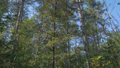 Autumn on Kraljevica hill near Serbian city of Zajecar beautiful nature color Stock Footage