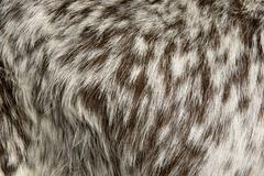 Close-up of Rove goat fur, full frame Stock Photos