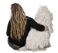 Rear view of a White Corded standard Poodle and a girl with dreadlocks sitting i - stock photo