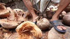 A man is taking husk off coconut with iron arms. - stock footage