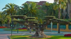 Beautiful tree and palm trees, Salou, Costa Daurada in Catalonia, 4k Spain Stock Footage
