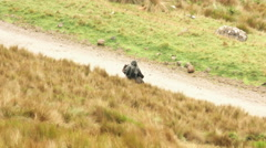 Mysterious rider on countryside Stock Footage