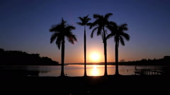 Brazil, Pantanal - Palm tree and sun rising. Paradise beach - stock footage