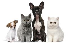 Group of dogs and cats in front of white background - stock photo