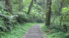 walking through the green forest trail - stock footage