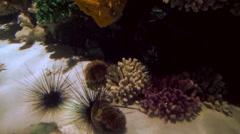 Urchin Stock Footage